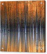 Emerging Beauties Reflected Acrylic Print
