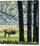 Emerging From The Fog Acrylic Print by Priscilla Burgers