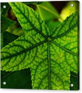 Emerging Greens Acrylic Print