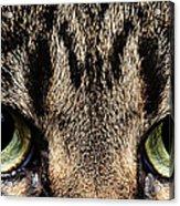 Emmy Eyes Acrylic Print