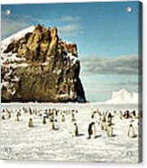 Emperor Penguin Colony Cape Washington Antarctica Acrylic Print