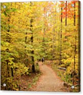 Empty Trail Runs Through Tall Trees Acrylic Print