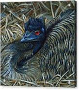 Emu Elegance Acrylic Print