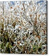 Encased In Ice Acrylic Print