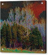 Enchanted Forest 10 Acrylic Print