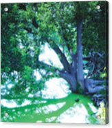 Enchanted Forest 15 Acrylic Print