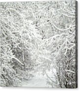 Enchanted Forest 7 Acrylic Print