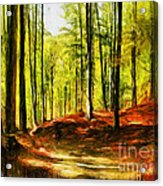 Enchanted Forest - Drawing  Acrylic Print