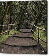 Enchanted Forest Garajonay National Park La Gomera Spain Acrylic Print