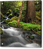 Enchanted Forest Acrylic Print by Pamela Winders