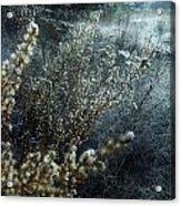 Enchanted Frost Acrylic Print