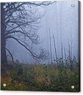 Enchanted Mist - Casper Mountain - Casper Wyoming Acrylic Print