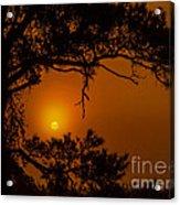 Enchanted Morning Acrylic Print