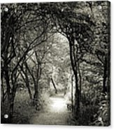 Enchanted Path Summer Acrylic Print
