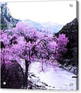 Enchanted Pink Acrylic Print