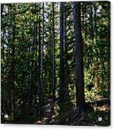 Enchanted Trail Acrylic Print