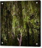 Enchanted Willow Acrylic Print