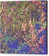 Enchanted Wood II Acrylic Print