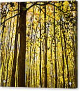 Enchanted Woods Acrylic Print