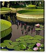 Enchanting Water Garden Acrylic Print