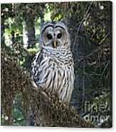 Encounter With An Owl Acrylic Print by Heike Ward