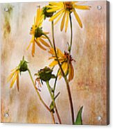 End Of Summer Bouquet Acrylic Print