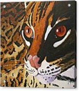 Endangered - Ocelot Acrylic Print