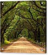 Endless Oaks Acrylic Print
