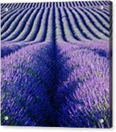 Endless Rows Acrylic Print