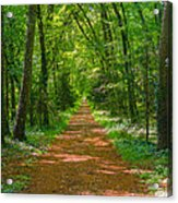 Endless Trail Into The Forest Acrylic Print