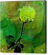 Enduring Yellow Rose Acrylic Print by Shirley Sirois