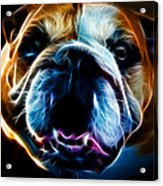English Bulldog - Electric Acrylic Print by Wingsdomain Art and Photography