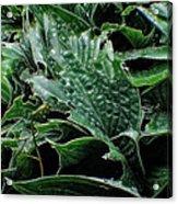 English Country Garden - Series V Acrylic Print by Doc Braham