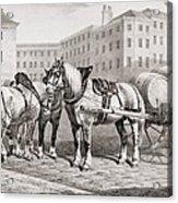 English Farm Horses, 1823 Acrylic Print