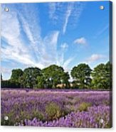 English Lavender Fields In Hampshire Acrylic Print