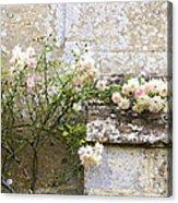 English Roses I Acrylic Print
