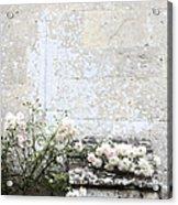 English Roses IIi Acrylic Print