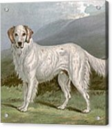 English Setter - Left Acrylic Print