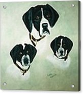 English Setter Momma And Pups Acrylic Print