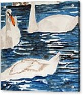 English Swan In The Queen's Garden Acrylic Print