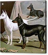 English Terriers Acrylic Print