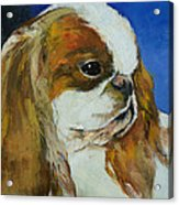 English Toy Spaniel Acrylic Print by Michael Creese