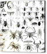 Entomology Myriapoda And Arachnida  Acrylic Print