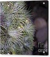 Epiphyte Globe Acrylic Print