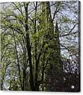 Episcopal Cathedral In Edinburgh Visible Through Trees Acrylic Print
