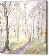 Epping Forrest Acrylic Print by David  Hawkins
