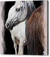 Equine Horse Head And Tail Acrylic Print by Daniel Hagerman