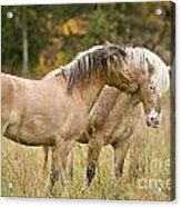Equine Love Acrylic Print