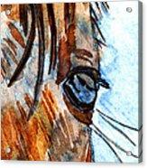 Equine Reflection Acrylic Print