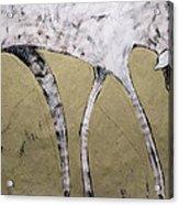 Equos Acrylic Print